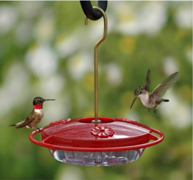 Safely Feeding Hummingbirds