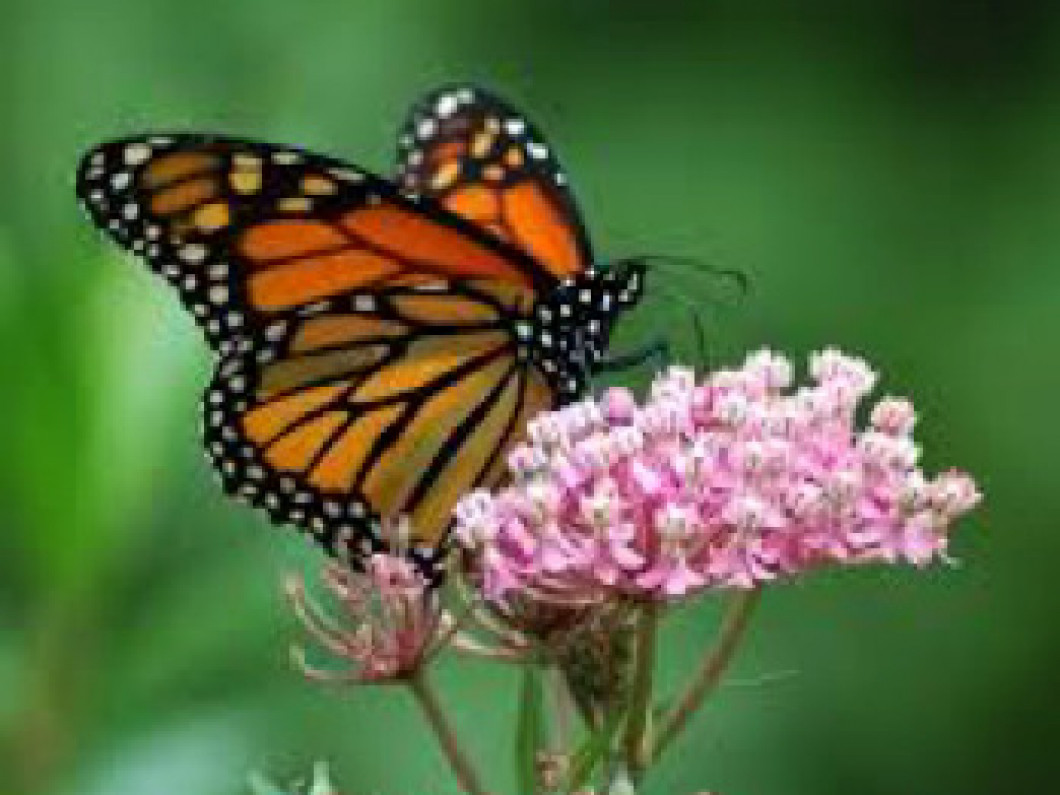 Fun Butterfly Facts