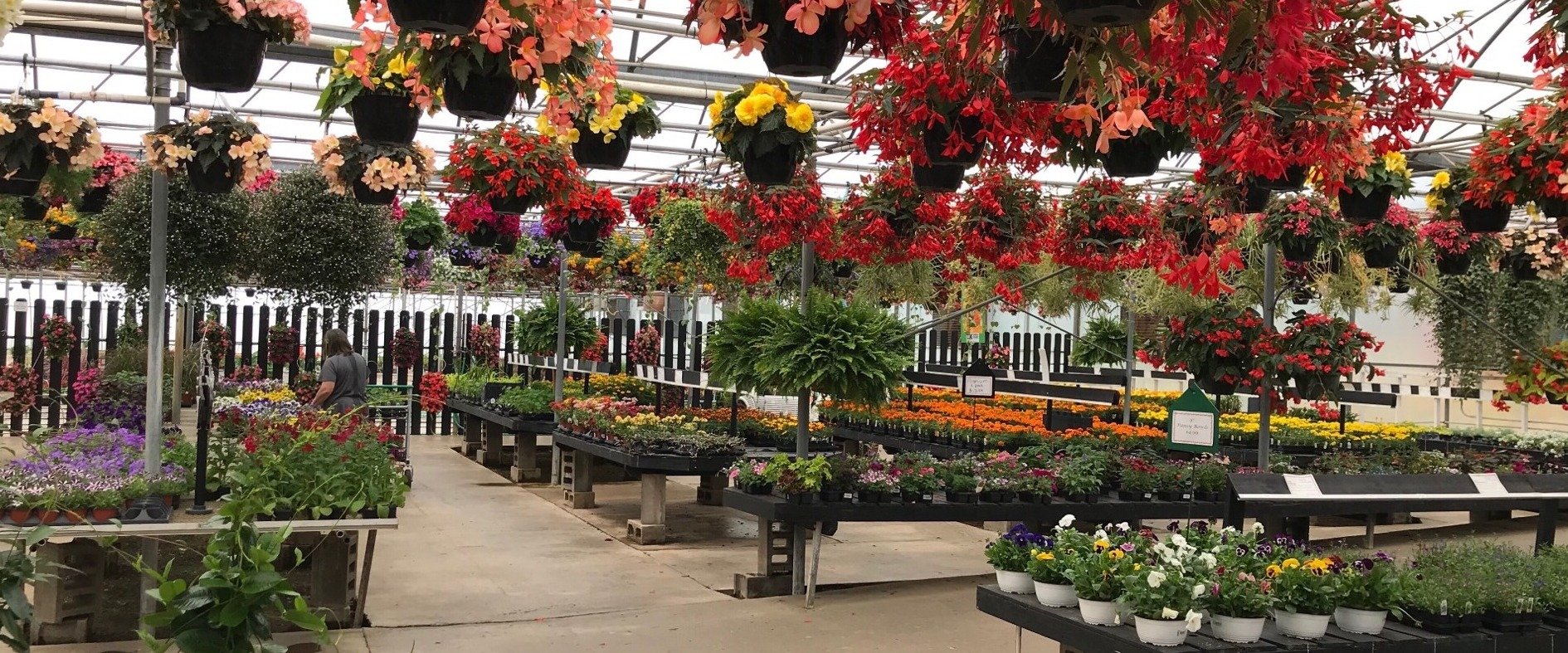 K Drive Greenhouse: East Leroy, MI: Flowers, Trees, Shrubs, Plants ...
